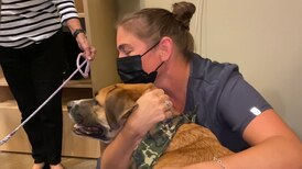 Therapy dogs visit pandemic-worn healthcare workers at Saint Francis