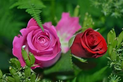 Allan's Rose Tips & Favorite Varieties List For 2021