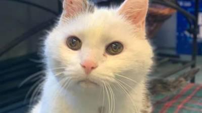 North Carolina woman, 101, adopts 19-year-old cat