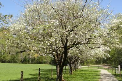 Allan's Top 10 Plants For Okie Landscapes