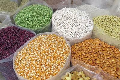 Vegetable Seed Catalogs